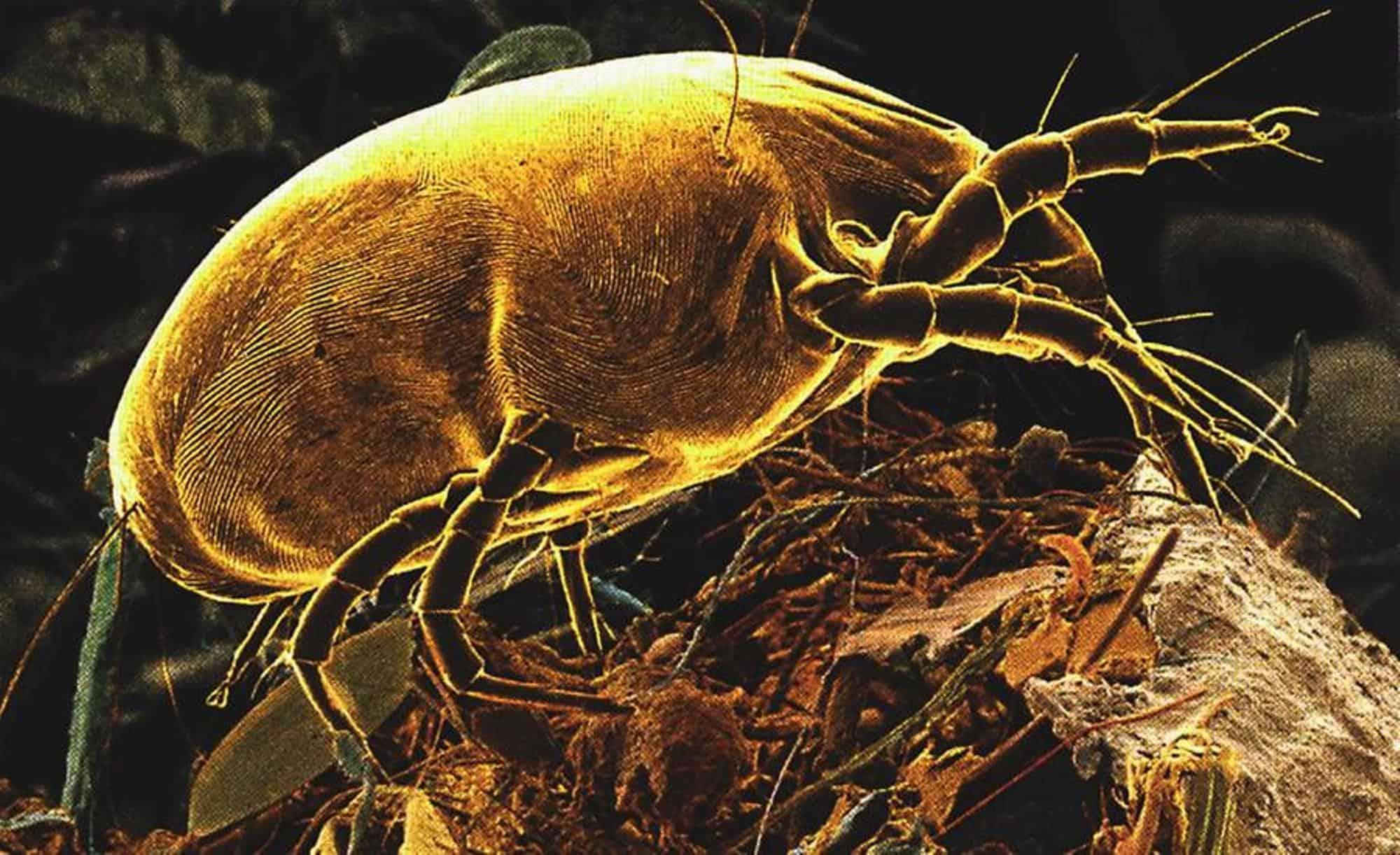 Come Uccidere Acari Della Polvere come eliminare gli acari in 8 mosse | disinfestazione acari